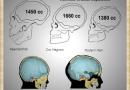 Brain capacity (Cro-Magnon Man)